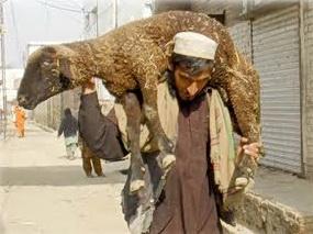 A joyful shepherd carrying the sheep back to its fold